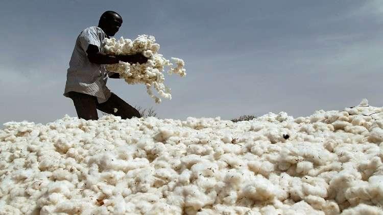 تركيا تشتري محصول القطن السوداني بالكامل