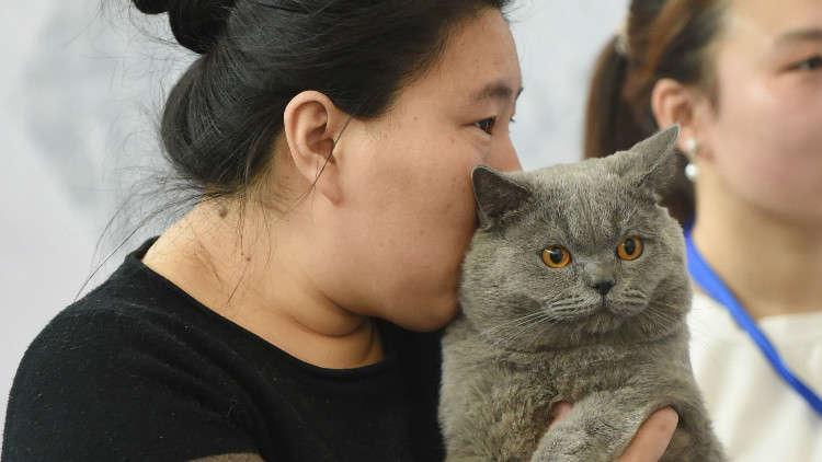 لماذا أدمن شباب الصين على شمّ القطط؟