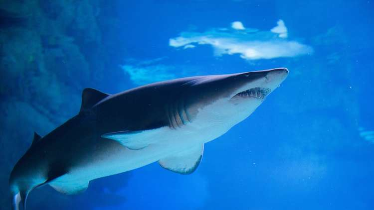 مئات من أسماك القرش النافقة على جادة في المكسيك
