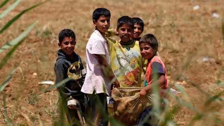 أطفال سوريون يعملون في حقول لبنان لمساعدة عوائلهم النازحة - أرشيف