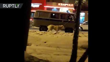 شرطة روسية تعتقل كلبا بسبب سلوكه العدواني!