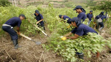 الأمم المتحدة تلجأ  لحارسات البذور الأصليات لمكافحة الجوع