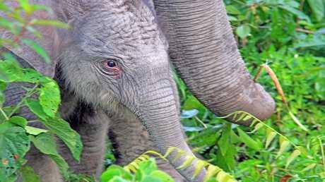 تطوير حبوب منع حمل للرجال من مركب سام يقضي على الفيلة!