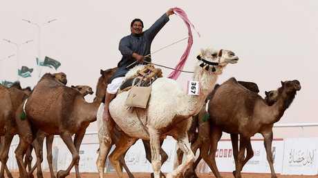 جانب من مهرجان الملك عبد العزيز للإبل الثاني خلال الفترة من 1 يناير إلى 1 فبراير 2018