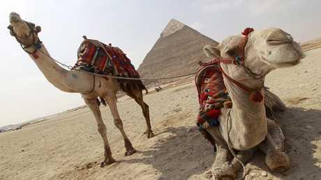 صندوق النقد يرفع توقعاته لأداء الاقتصاد المصري