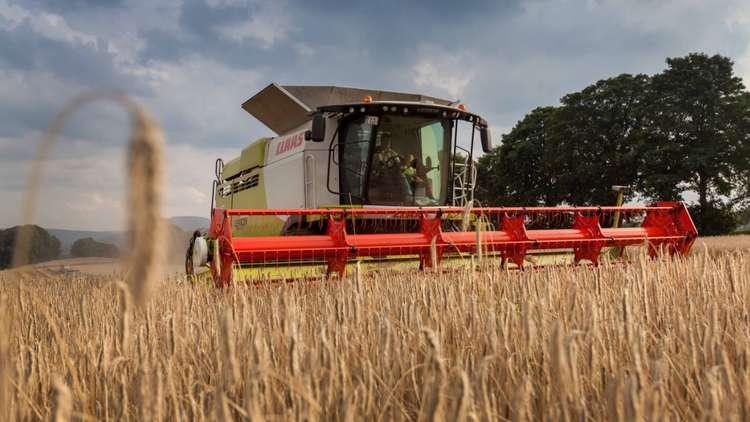 روسيا تخطط لجمع ما لا يقل عن 110 ملايبن طن من القمح هذا العام