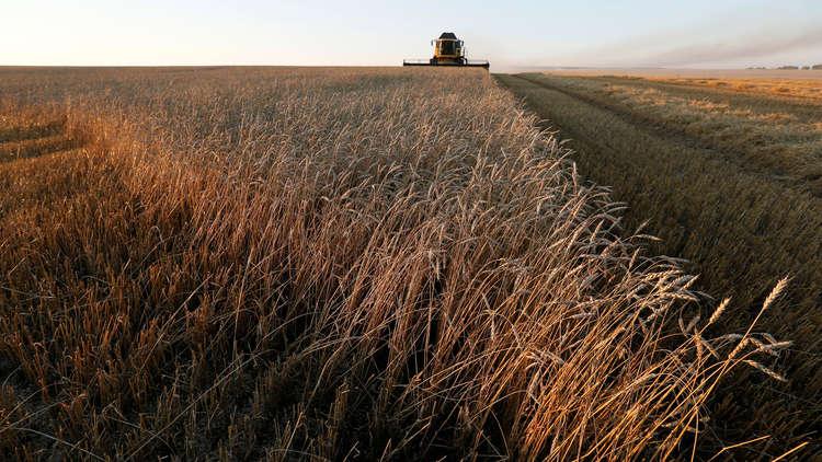 القمح الروسي إلى العراق عبر المطاحن الإيرانية