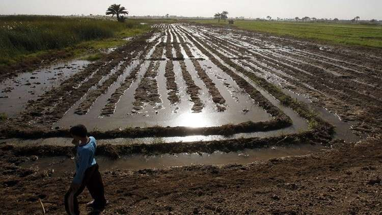 مصر بصدد تدشين مزرعتها النموذجية السابعة في إفريقيا