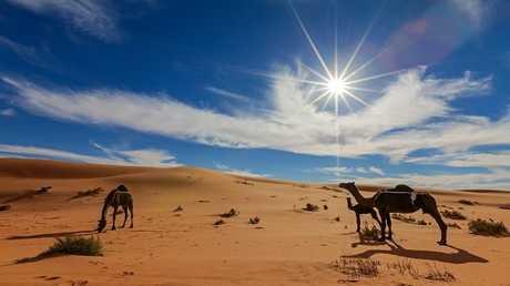 صحراء السعودية تستقطب منحوتات لا مثيل لها للإبل