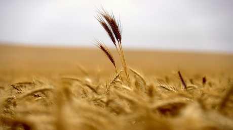 مصر.. أكبر سوق للسلع الغذائية الروسية
