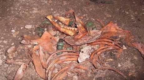 اكتشاف أنماطا جديدة للهجرة ما قبل التاريخ