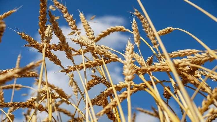 مذكرة روسية إيرانية كازاخستانية لتسهيل تجارة القمح