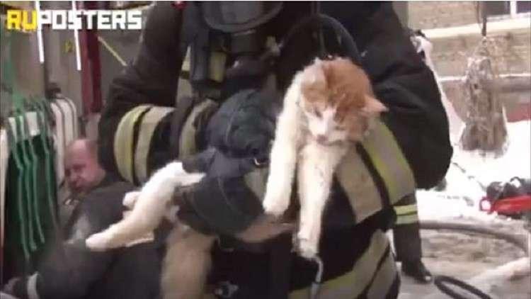 إنقاذ حياة قطة.. مشاهد مؤثرة للغاية!