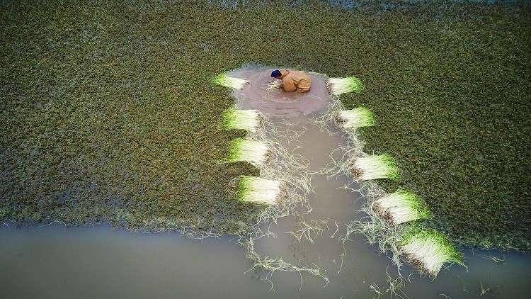 تعديل النباتات وراثيا للمساعدة على إطعام العالم