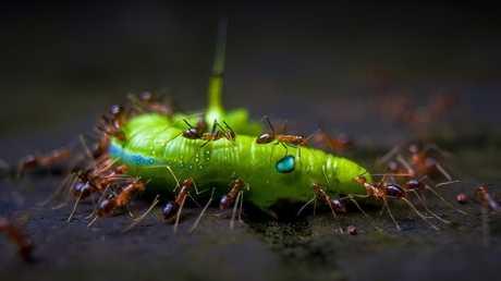 كيف يقوم جيش النمل الذكي ببناء