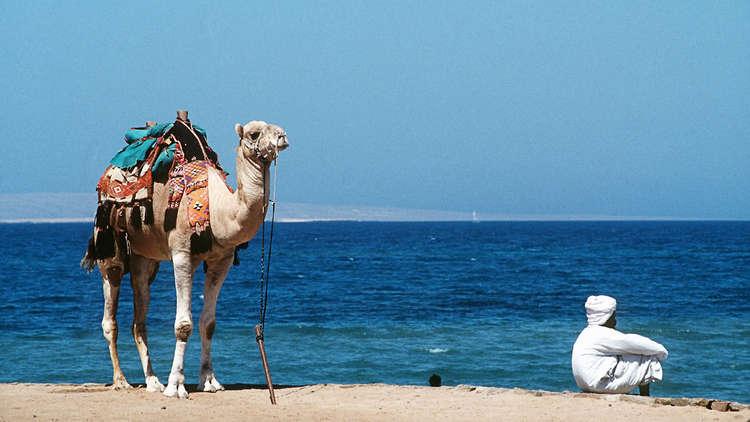 مصر.. سفينة صينية تكشف كميات هائلة من النفط في البحر الأحمر