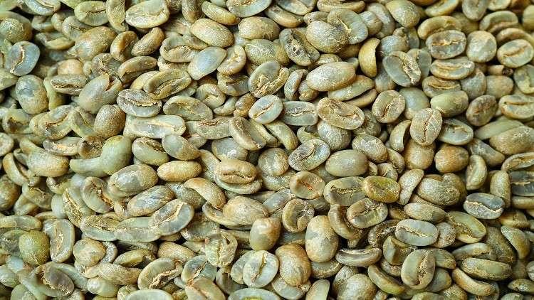 القهوة الخضراء.. حارقة للدهون!