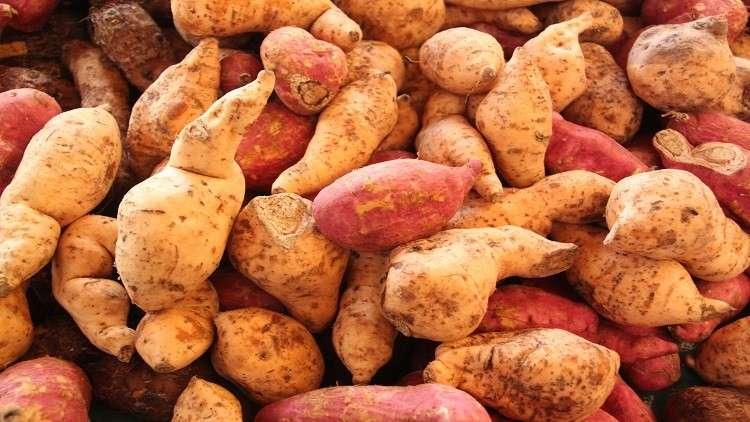 تاريخ البطاطا الحلوة يكشف العلاقات القديمة بين البشر