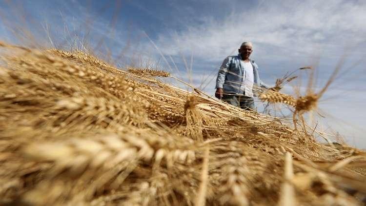 مصر تقضي على سوق القمح السوداء