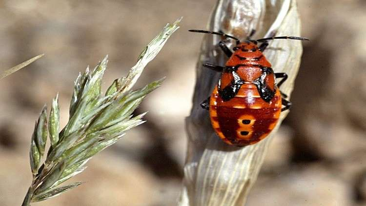 كيف اكتسبت الحشرات قدرتها على الطيران؟