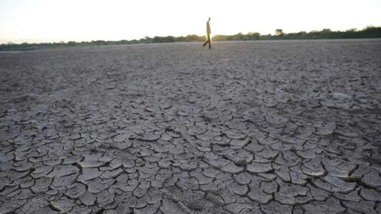 مصر تستنبط محاصيل جديدة تقتصد في امتصاص الماء