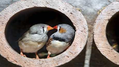 """وأخيرا .. العلماء يحلون لغز """"هجرة الطيور""""!"""