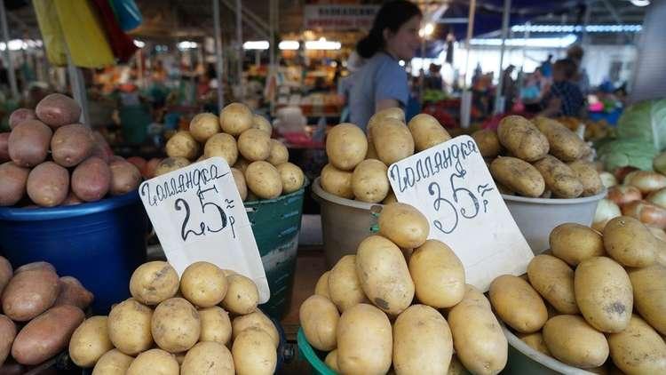 حظر دخول 140 طن من البطاطا المصرية إلى الأسواق الروسية