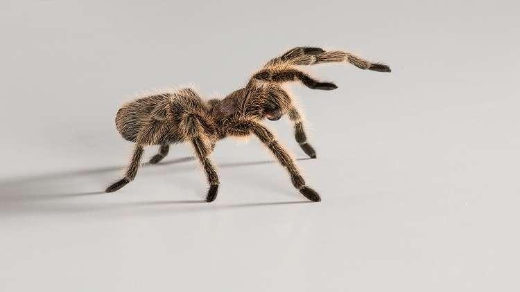 تدريب العنكبوت