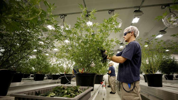 إبرام صفقة قياسية في سوق المخدرات الشرعية!