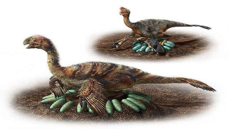كيف حضنت الديناصورات الضخمة بيوضها دون سحقها؟
