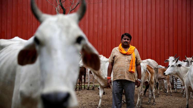 حشد من الهندوس يقتل مسلما هنديا لذبحه بقرة!
