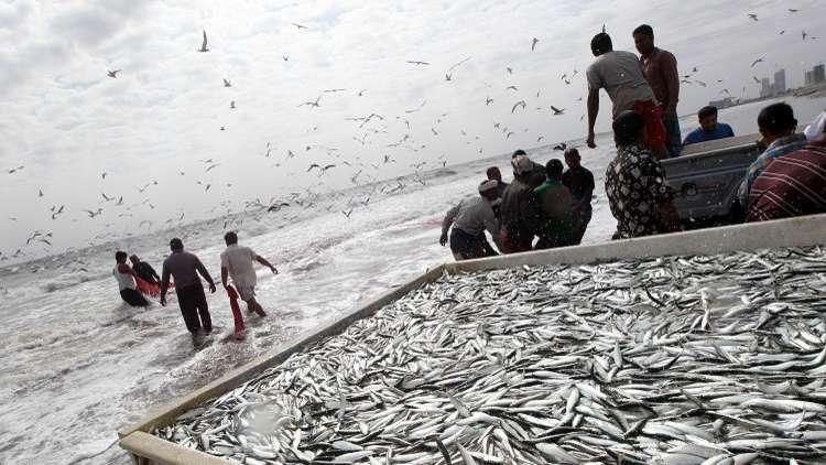 الأسماك تغزو صلالة العمانية