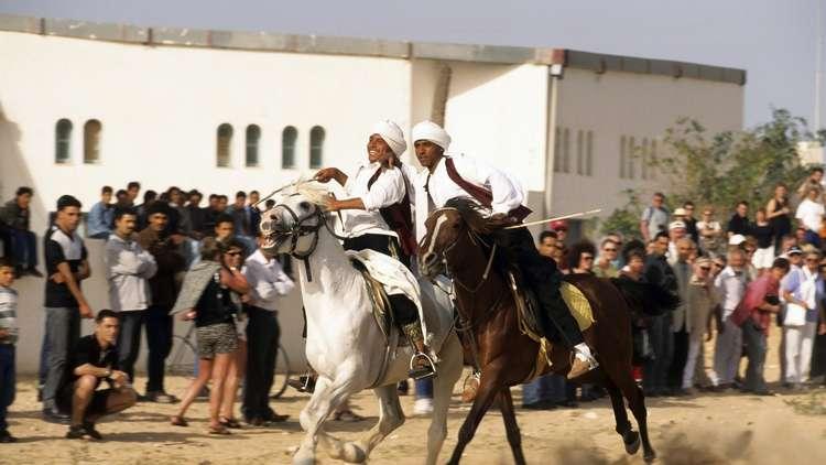 بعد 8 سنوات من الحظر.. مصر تصدر خيولا عربية أصيلة إلى العراق