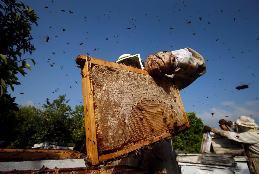 هل يهدد تدهور أعداد النحل مستقبلنا الغذائي؟