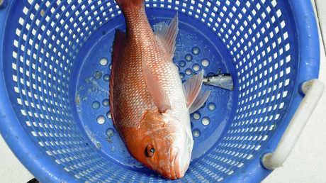 سلطنة عمان تبرم اتفاقية لإقامة أكبر مزرعة سمكية في الشرق الأوسط