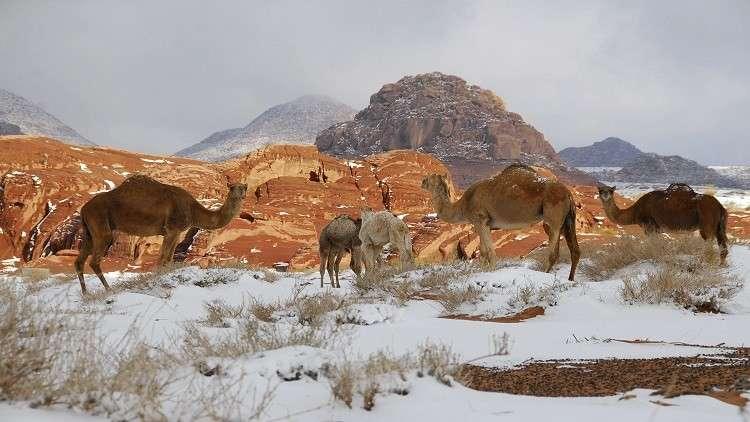 بأمر ملكي.. إنشاء 6 محميات طبيعية في السعودية