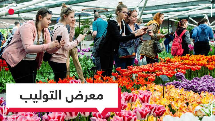 فيديو.. أكبر معرض لزهور التوليب بالعالم