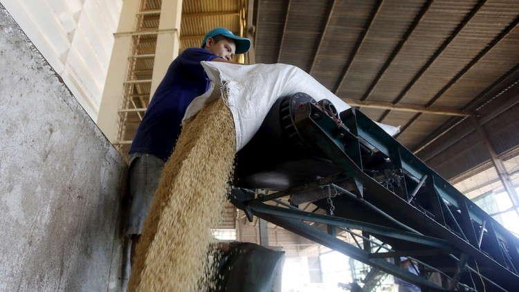 رسميا.. مصر تعلن البدء باستيراد الأرز