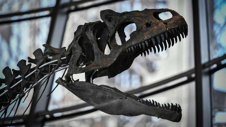 بيع بقايا ديناصور نادرة بمليوني يورو في باريس