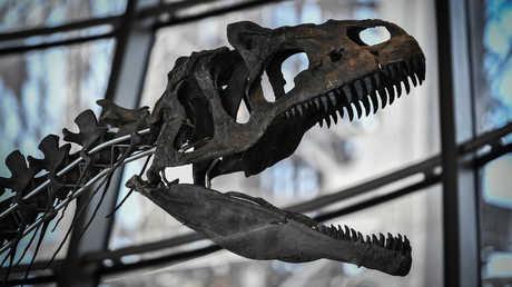 بيع بقايا ديناصور نادر بمليوني يورو في باريس