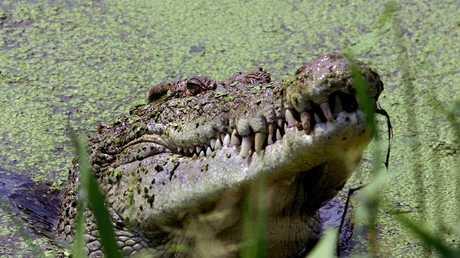 """تمساح """"يلتهم"""" قسيسا خلال مراسم التعميد!"""