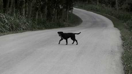 كوريا الجنوبية تسن قانونا جديدا بشأن الكلاب