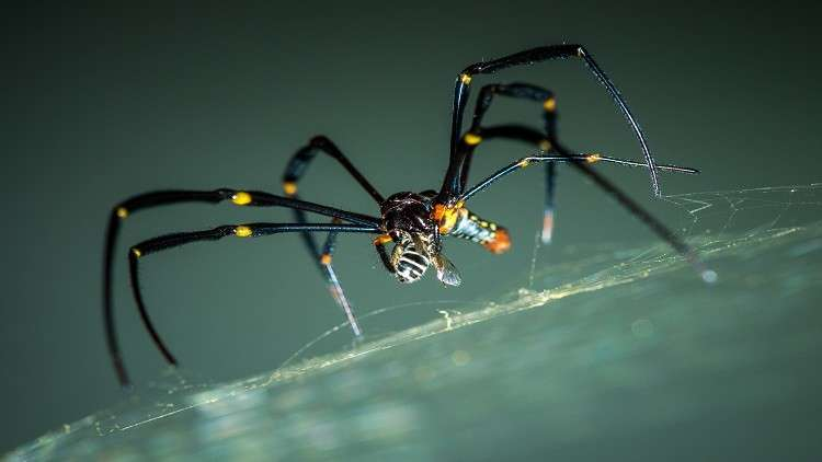 اكتشاف عنكبوت