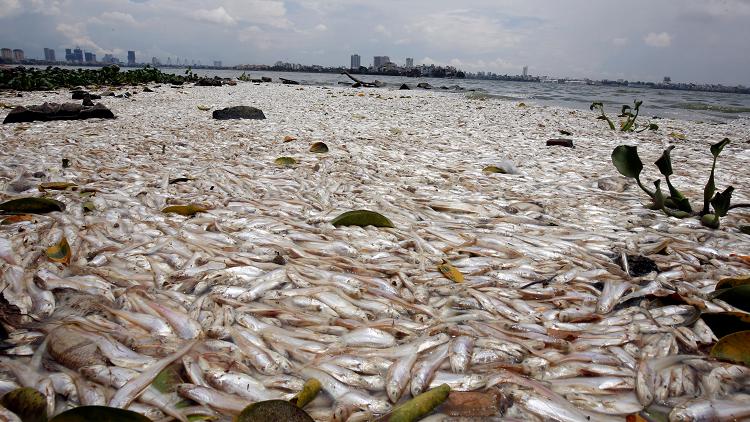 الأمم المتحدة: ثلث غلال الصيد من السمك لا يصل إلى الموائد