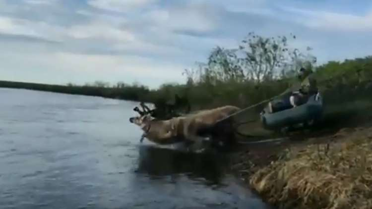 طريقة قد تكون الأفضل لعبور الأنهار في سيبيريا