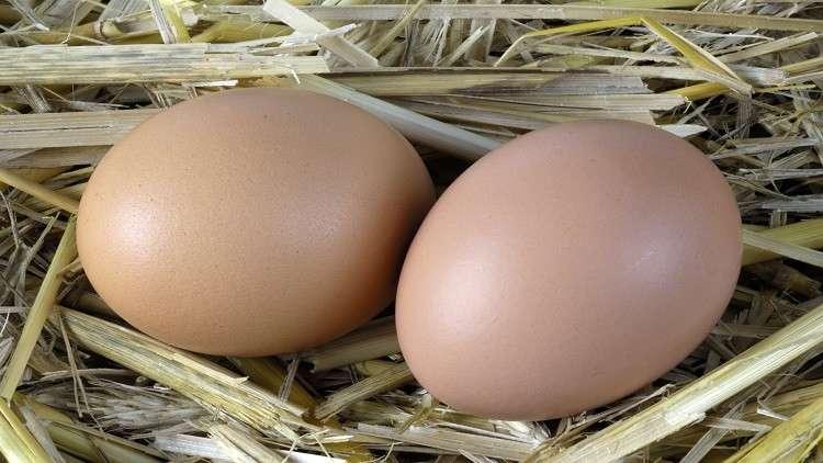 ماذا يحدث إذا تناول الإنسان البيض يوميا؟