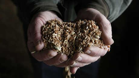روسيا تحقق طفرة في الصادرات الزراعية