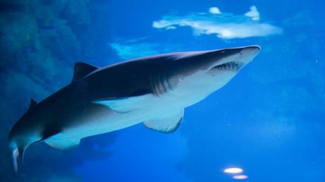 سمكة قرش تقتل سائحا قبالة السواحل المصرية