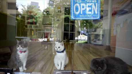ماليزيا.. فندق لسلالات القطط المدللة