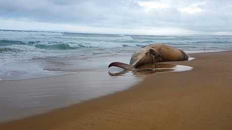 نفوق حيتان قبالة الشواطئ الايرلندية في ظروف غامضة!